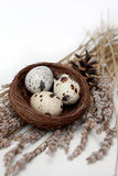 Eggs in Nest and Lavender Royalty Free Stock Photos