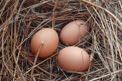 Eggs in the nest Royalty Free Stock Image