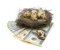 Eggs in the nest and money on a white background Royalty Free Stock Photos