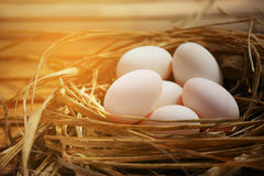 Eggs in nest on the nature or farm, Fresh eggs for cooking and material in Kitchen room, New eggs background for food magazine. Healthy food for old people or Stock Photo