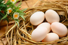 Eggs in nest on the nature, Fresh eggs for cooking or raw material, fresh eggs background Royalty Free Stock Photo