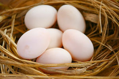 Eggs in nest on the nature, Fresh eggs for cooking or raw material, fresh eggs background Royalty Free Stock Photography