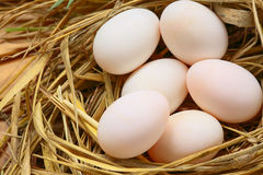 Eggs in nest on the nature, Fresh eggs for cooking or raw material, fresh eggs background Stock Images