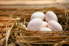 Eggs in nest on the nature, Fresh eggs for cooking or raw material, fresh eggs background Stock Photos