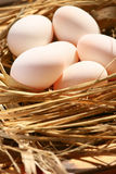 Eggs in nest on the nature, Fresh eggs for cooking or raw material, fresh eggs background Stock Photo