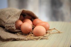 Eggs in nest on the nature, Fresh eggs for cooking or raw material, fresh eggs background. Royalty Free Stock Photography