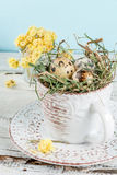 Eggs in a nest in an old coffee cup Royalty Free Stock Photo