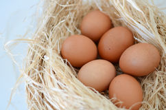 Eggs. In a nest over white background Stock Photography