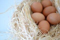 Eggs. In a nest over white background Royalty Free Stock Photos