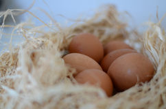 Eggs. In a nest over white background Royalty Free Stock Image