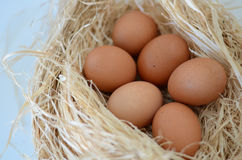 Eggs. In a nest over white background Stock Photo