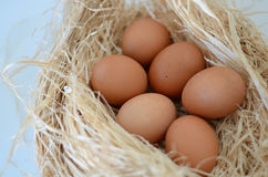 Eggs. In a nest over white background Stock Images