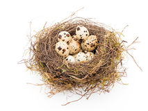 Eggs in the nest Royalty Free Stock Photos