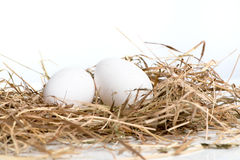 Eggs are in the nest Royalty Free Stock Photo