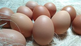 Eggs on nest Royalty Free Stock Image