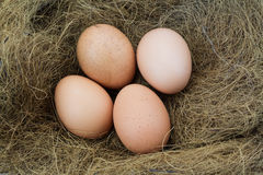 Eggs in a nest. Raw and fresh Stock Photo