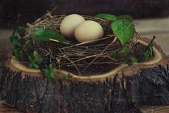 Eggs in the nest on rustic wooden background Royalty Free Stock Photos