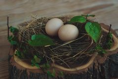 Eggs in the nest on rustic wooden background Royalty Free Stock Image