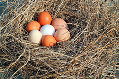 Eggs in a nest. Seven eggs in a straw nest stock photo