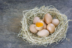 Eggs in nest. Still life brown eggs in nest on wooden background stock photo