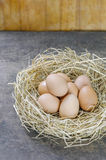 Eggs in nest. Still life brown eggs in nest on wooden background stock image