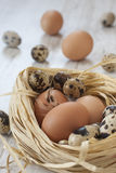 Eggs in nest on the table. Vertical close up of different egss in nest. Chicken and quail eggs on the white table stock photos