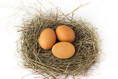 Eggs in the nest. Three eggs in a nest of straw Royalty Free Stock Images