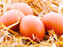 Eggs in nest Royalty Free Stock Image