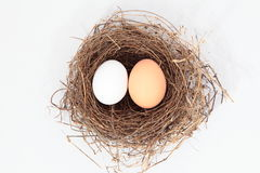 Eggs & Nest Royalty Free Stock Photo