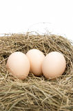 Eggs and nest Stock Photos