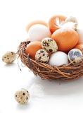 Eggs in a  nest on a white background Royalty Free Stock Photos