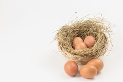 Eggs in a nest. Eggs in nest on white background Royalty Free Stock Photo