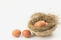 Eggs in a nest. Eggs in a nest on white background Stock Photos