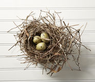 Eggs in Nest on Wood Stock Photo