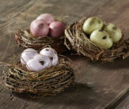 Eggs in Nest Stock Photos