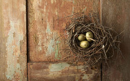 Eggs in Nest on Wood Stock Photos