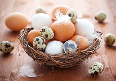 Eggs in a  nest on a wooden table Stock Image