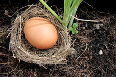 Eggs in nests placed on ground. Stock Images