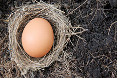 Eggs in nests placed on ground. Stock Photos