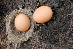 Eggs in nests placed on ground. Royalty Free Stock Images