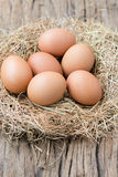 Eggs on net Royalty Free Stock Images