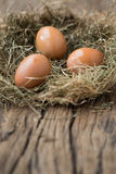 Eggs on net Royalty Free Stock Photography