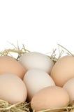 Eggs o close up fotos de stock