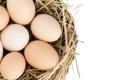 Eggs o close up imagens de stock royalty free