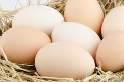Eggs o close up foto de stock