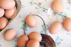 Eggs o estilo velho do vintage imagem de stock royalty free