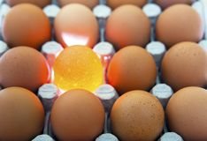 Eggs, one egg is illuminated Stock Photography