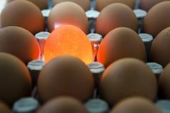 Eggs, one egg it is illuminated Stock Image