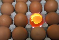 Eggs, one egg it is opened, the yolk is visible and it is illuminated Stock Photography