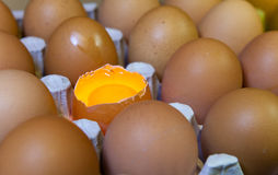 Eggs, one egg it is opened, the yolk is visible and it is illuminated Royalty Free Stock Photography